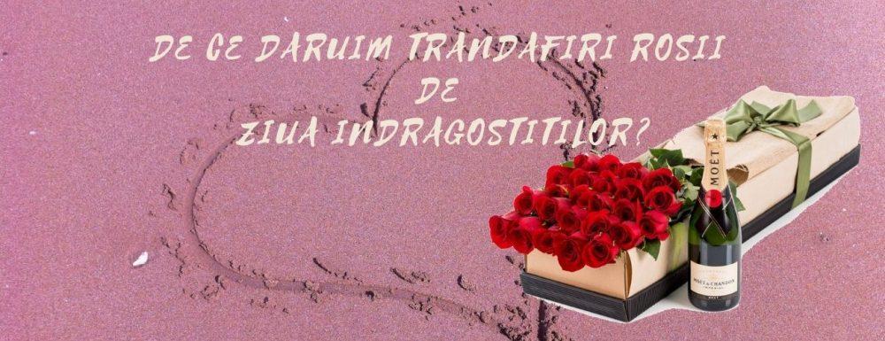 De ce daruim trandafiri rosii de Ziua Indragostitilor